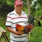 Otic Geroso: Six Decades In Love with Game Fowls