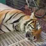 Visit the Eltoro Zoo De La Castellana in Southern Negros Occidental
