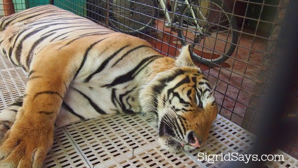 Visit the Eltoro Zoo De La Castellana in Southern Negros Occidental