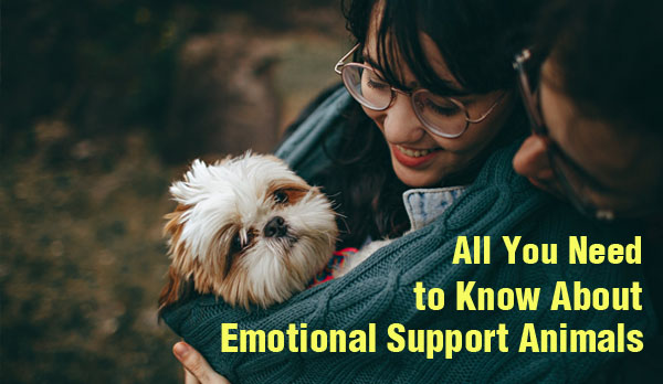 Emotional Support Animals| Everything You Need to Know