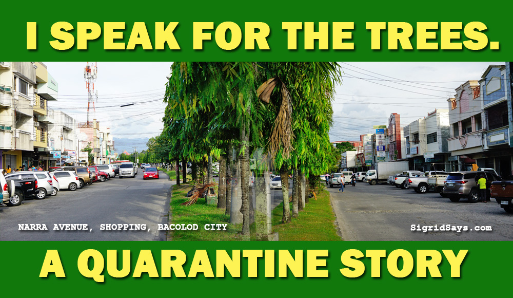 I speak for the trees - environment - Bacolod City - Narra Avenue center islands - wide roads