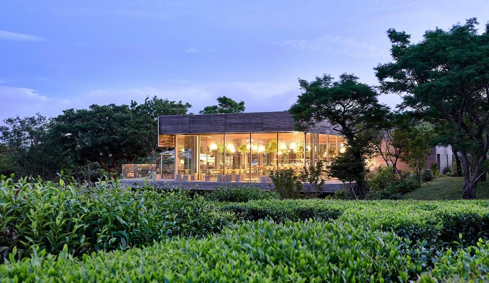 Innisfree Lists Green Tea Farms in Jeju Island, Korea on Airbnb
